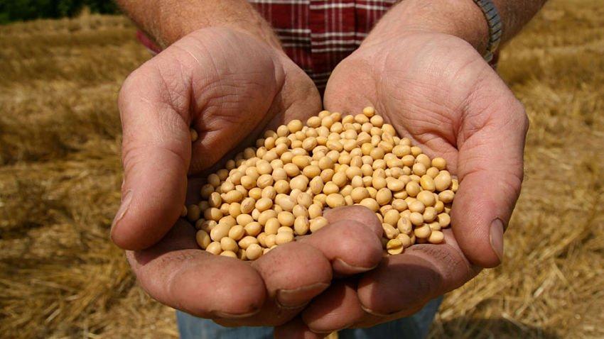 ¿Sabés cuáles son los proyectos de semillas en debate?