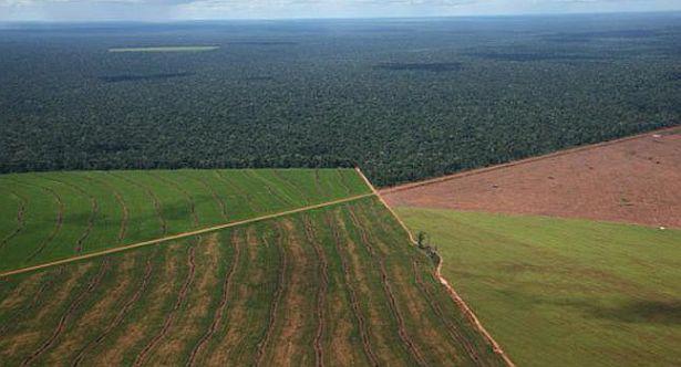 Pinedo presentó un proyecto de Ley de tierras