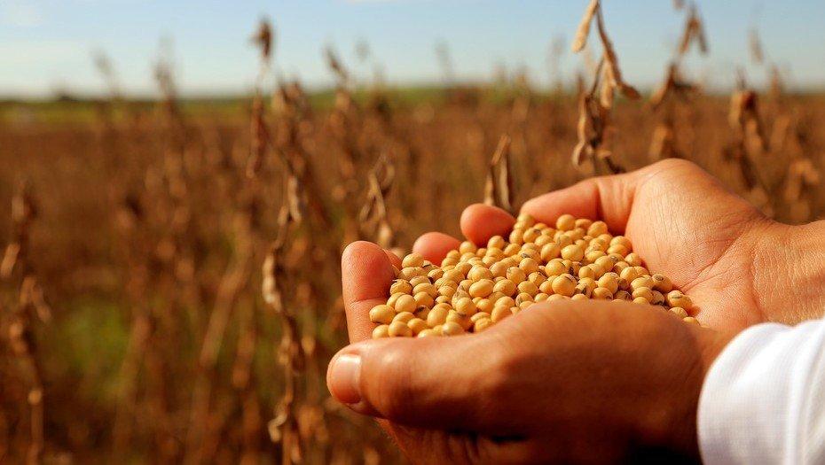 El próximo miércoles arranca el debate de la ley de semillas