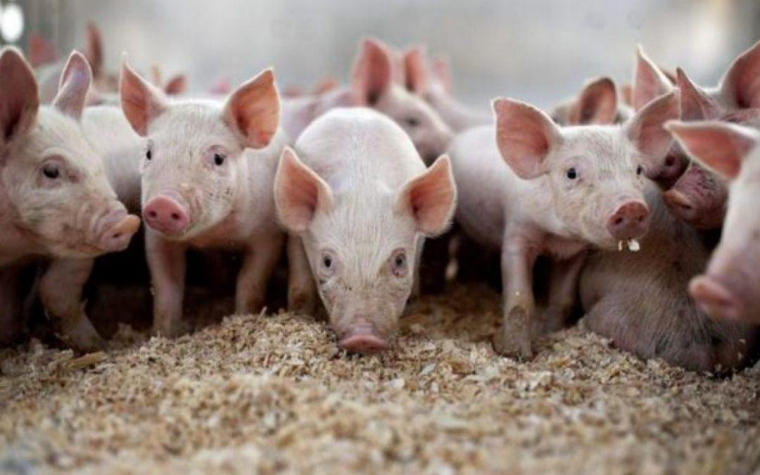 Envases y porcinos, en agenda de Diputados
