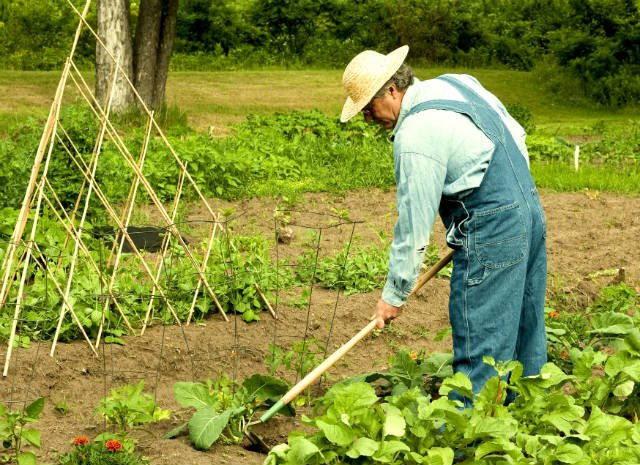 Diputados: autoridades de Agroindustria respondieron preguntas sobre agricultura familiar